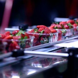 Food Process Packaging